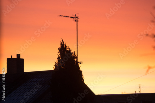 Christmas tree at dawn against the background of carpathian