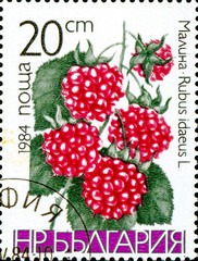 Ukraine - circa 2017: A postage stamp printed in Bulgaria shows drawing Raspberry, Rubus idaeus. Series: Fruits. Circa 1984.