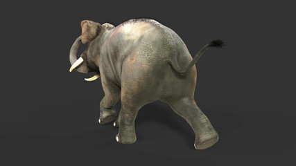 3d Illustration elephant isolate on back background, Elephant in dark with clipping path.