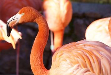 Flamingi zoo Lizbona