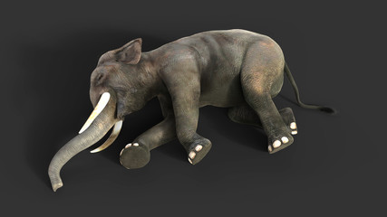 3d Illustration elephant isolate on black background, Elephant in dark with clipping path.