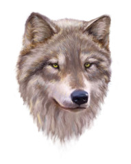 Wolf head on a white background.