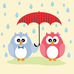 Cute lovely owls couple under umbrella.þ Greeting card