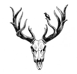 Deer skull and bird