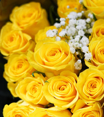 Fototapete - Flower background of yellow rose