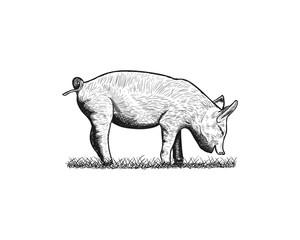 Unique Black Cute Pig Livestock Illustration Animal Vector Hand Drawing Logo Silhouette