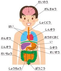 「内臓の位置」の検索結果 - Yahoo!知恵袋