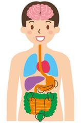 簡易的な内臓のイラスト