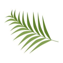 tropical palm leaf icon