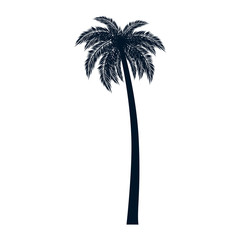 Wall Mural - tropical palm tree icon