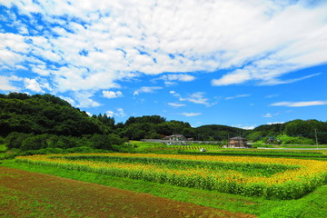 緑と花の田舎の風景7