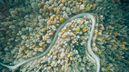 Autumn Forest Road from a Drone, Yedigoller Bolu