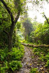 Jungle und Pflanzen