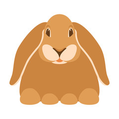 rabbit  vector illustration flat style front view