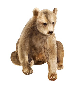 Watercolor sitting bear cub