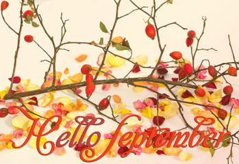 "Postcard with the inscription ""Hello September"". Autumn composition. Leaves rose. Autumn. The composition consists of viburnum twigs and wild rose. Autumn leaves."