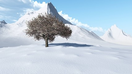 sakura. winter cherry on a snowy landscape.