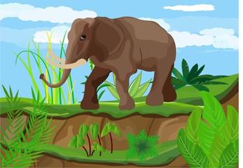 Elephant in the Savannah, wildlife scene landscape.