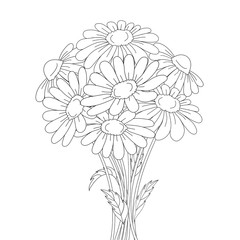Beautiful daisies isolated on a white background.