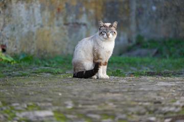 Katze sitzt auf Weg