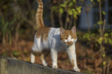 street cat walking on a wall