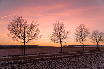 A row of trees during sunset in winter