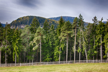 Foresta in Trentino Alto Adige