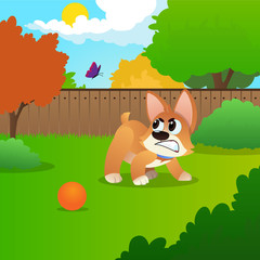 Little corgi standing on green meadow and growling at flying butterfly. Colorful nature landscape with trees, fence and blue sky. Flat vector design.