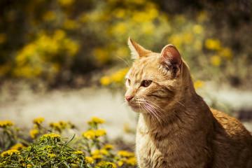 Gatito anaranjado
