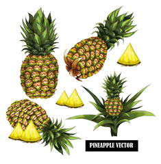 Set with hand-drawn pineapple. Vector illustration.