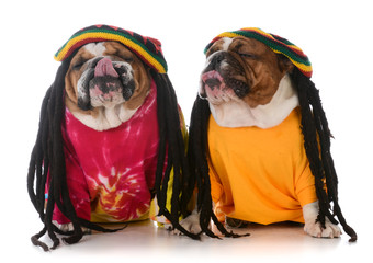 two dogs with dreadlock