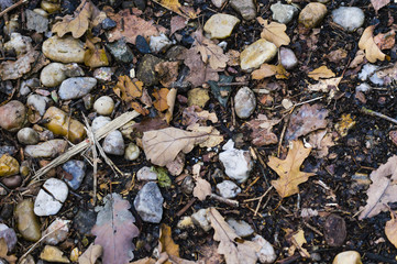 stones and leaves