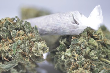 Green marijuana buds with joint laying on table