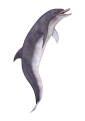 3D Rendering Dolphin on White