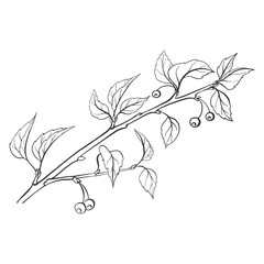 vector twig with leaves