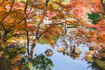 Autumn Fall season in Japan colorful maple tree nature landscape for travel background