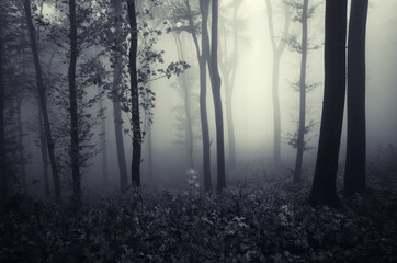 fantasy forest landscape with trees in fog