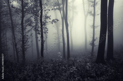 fantasy forest landscape with trees in fog stock photo and royalty