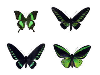 Set of four green tropical butterflies