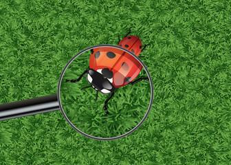 coccinelle - nature - symbole - loupe - naturelle - herbe - fond - détail - insecte - observer - petit