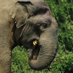 head of elephant walking in national park