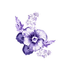 Hand drawn watercolor illustration African Violet Flowers
