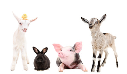 Group of funny farm animals together isolated on white background