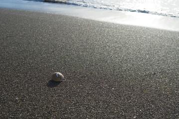 貝がら 砂浜 素材