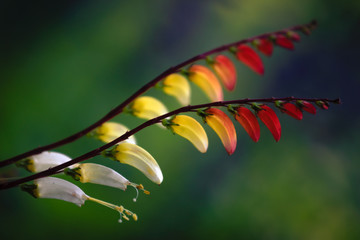 Artistic close-up photo of a colorful exotic flower against blurred, dark natural background