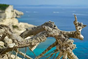Wurzelstock an der Küste von Bonifacio
