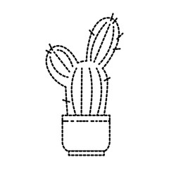 pot with desert plant
