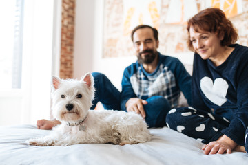 Couple relaxed at home in bed with the dog .