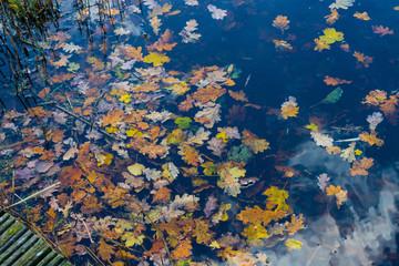 autumn leaves swimming