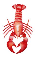 Red Lobster watercolour illustration. Claws show love heart shape. Seafood product, restaurant menu. Hand drawn painting, isolated on white background. Symbol of nobility, temperance, regeneration.